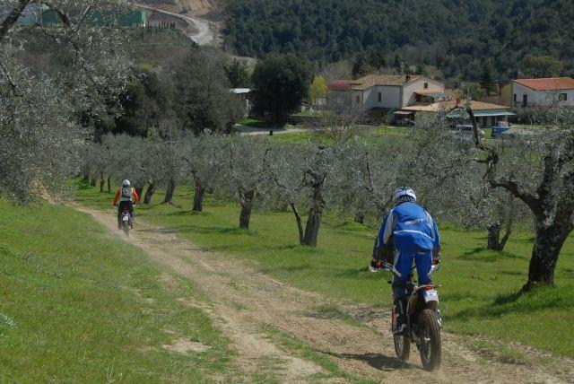 Mit der Eduro durch den Olivenhain